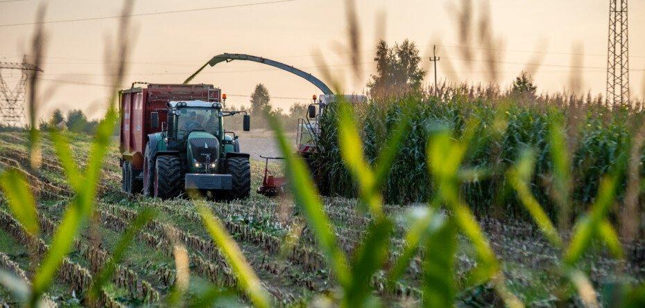 Zbiory kukurydzy 2021 będą rekordowe? Dowiedz się więcej!