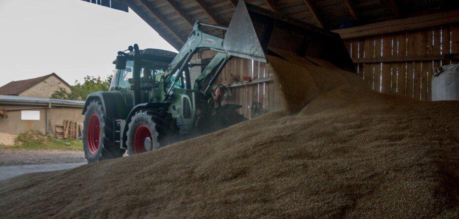 Rynek zbóż 2021 – jakie są aktualne ceny? Sprawdź!